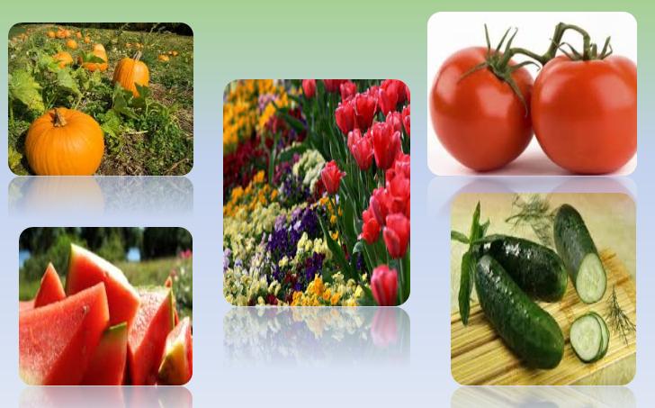 Ogledni čas – Razvoj bilјke